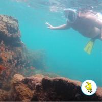 Full Face Snorkeling (Mergulho de Superfície)