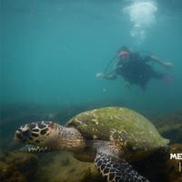 Mergulho com Cilindro (acompanhado do Instrutor)