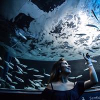 Visita guiada ao AquaRio com transfer