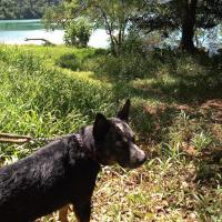Pet Trips Paraty