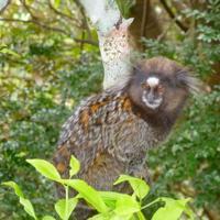 Floresta da Tijuca e Jardim Botânico com transfer