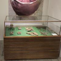 Museu de Arqueologia e Ciências Naturais