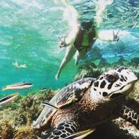 Tourtuga Ilha Grande