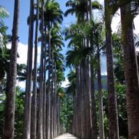 Jardim Botânico e Parque Lage com transfer